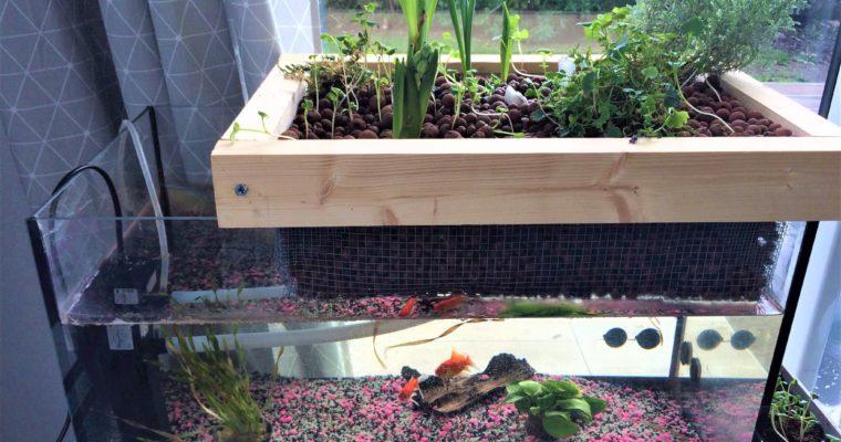 L'aquaponie : un écosystème autonome